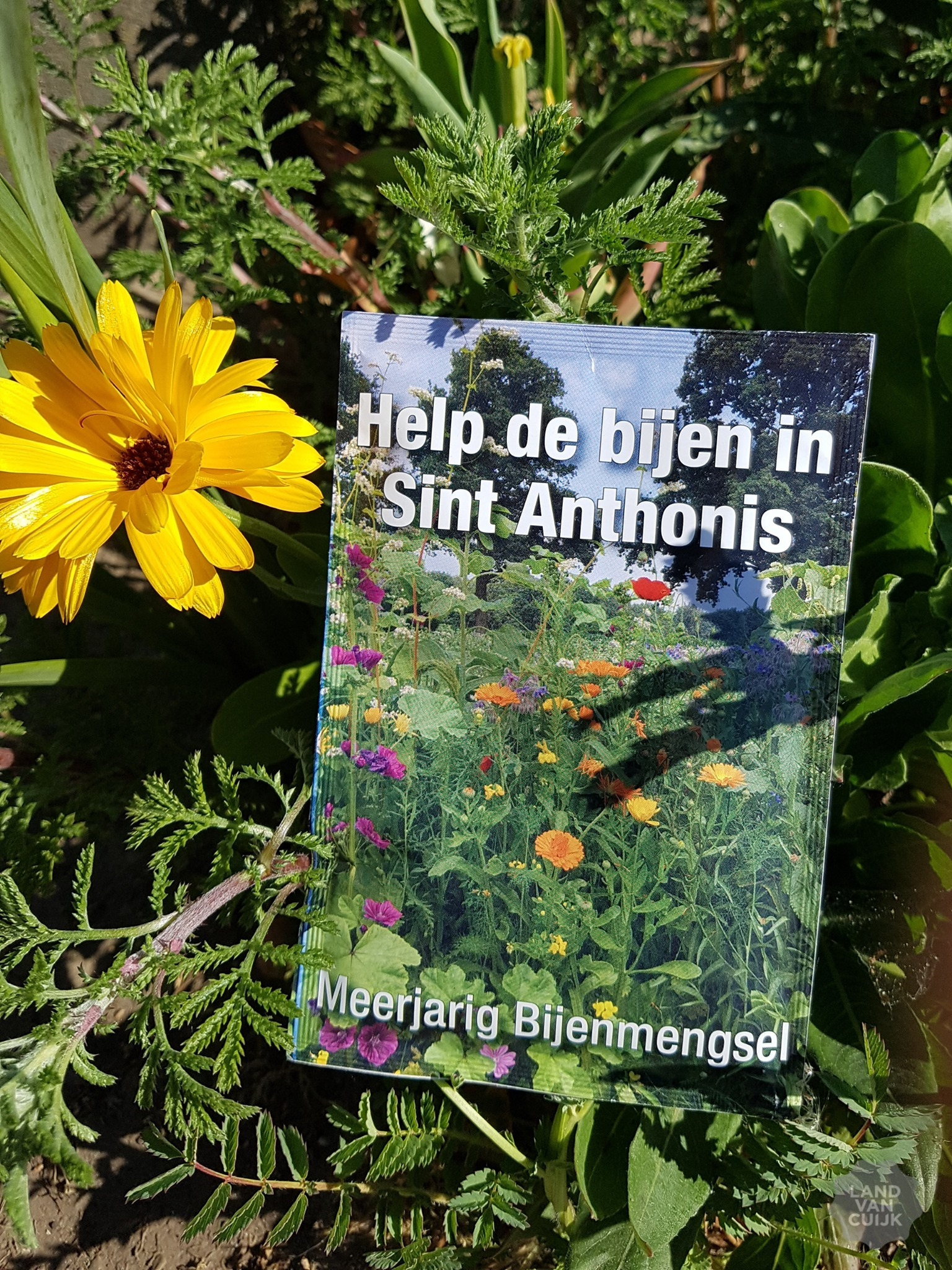 Help de wilde bijen in Sint Anthonis
